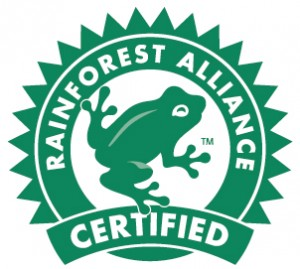rainforest cerified frog.jpg